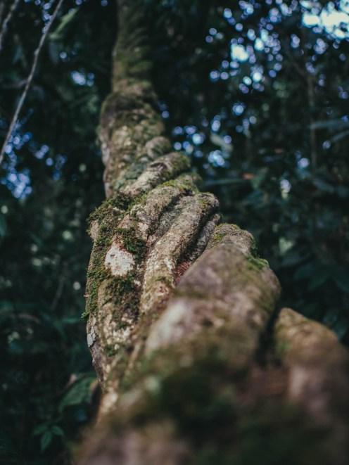 cameron highland liane