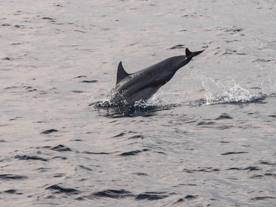 mirissa dauphins bis