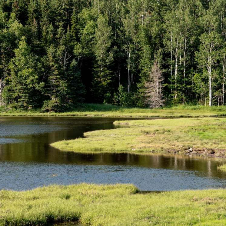 Parc national de Forillon Québec Taïga