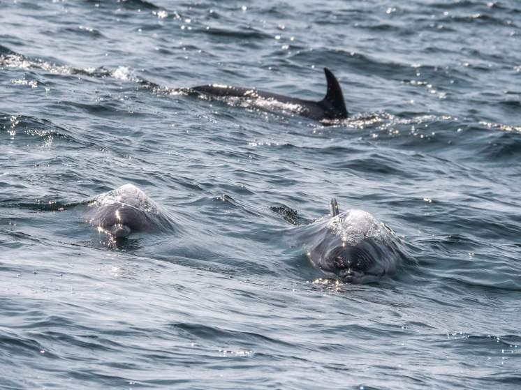 Parc national de Forillon Québec dauphins