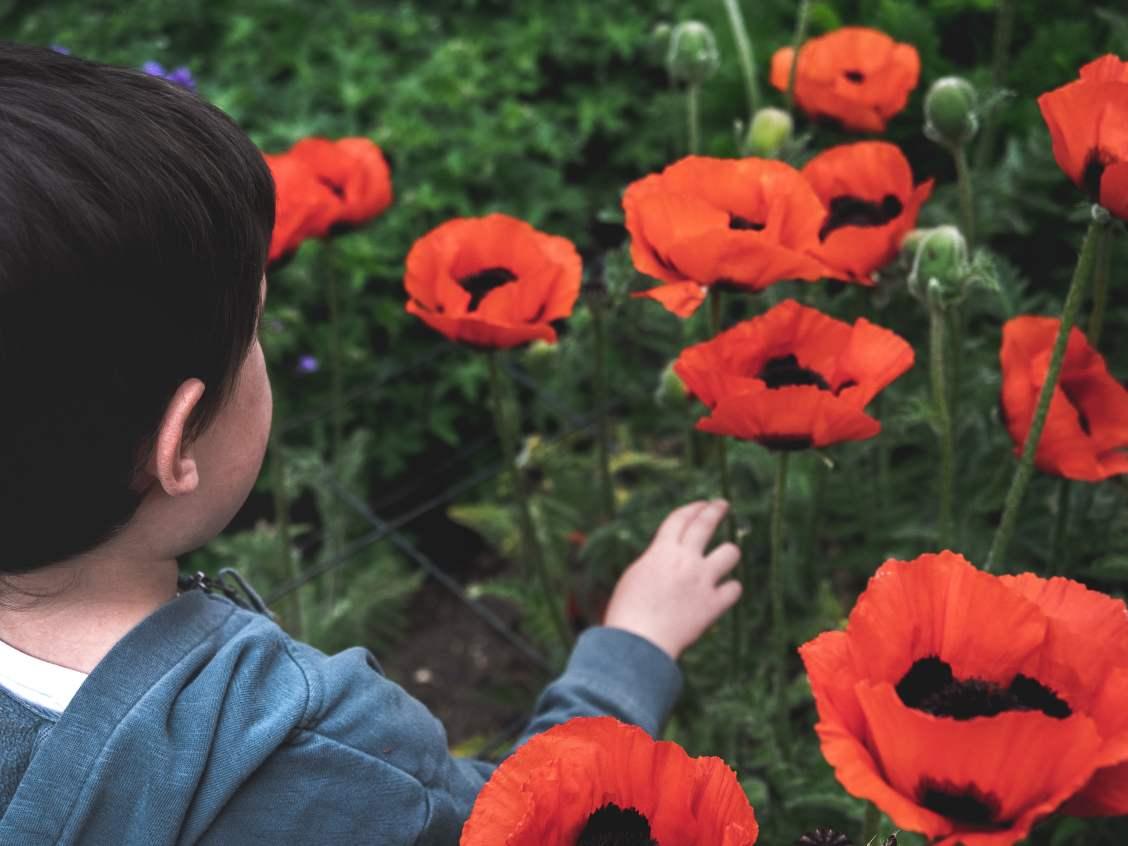 parc floral apremont sur Allier Berry