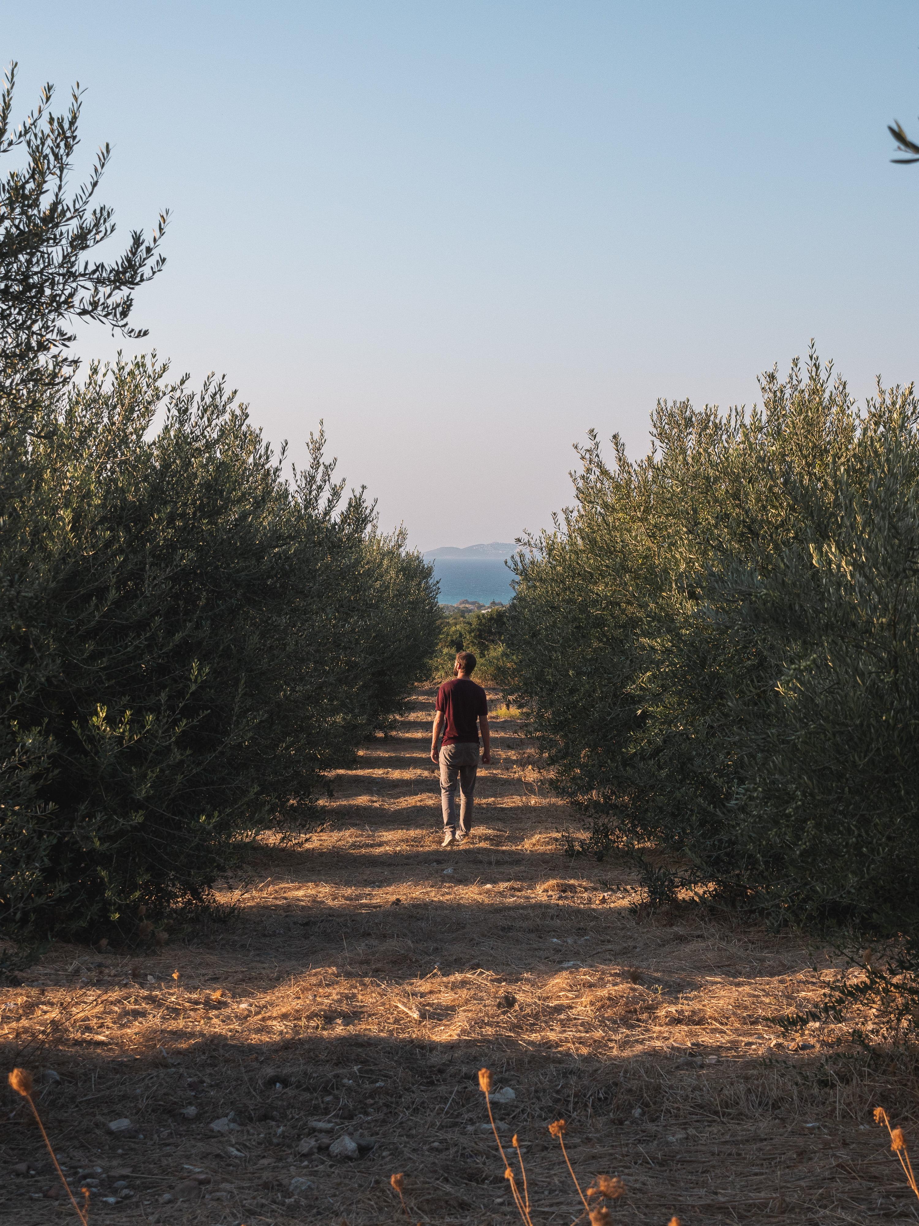 kos olivier