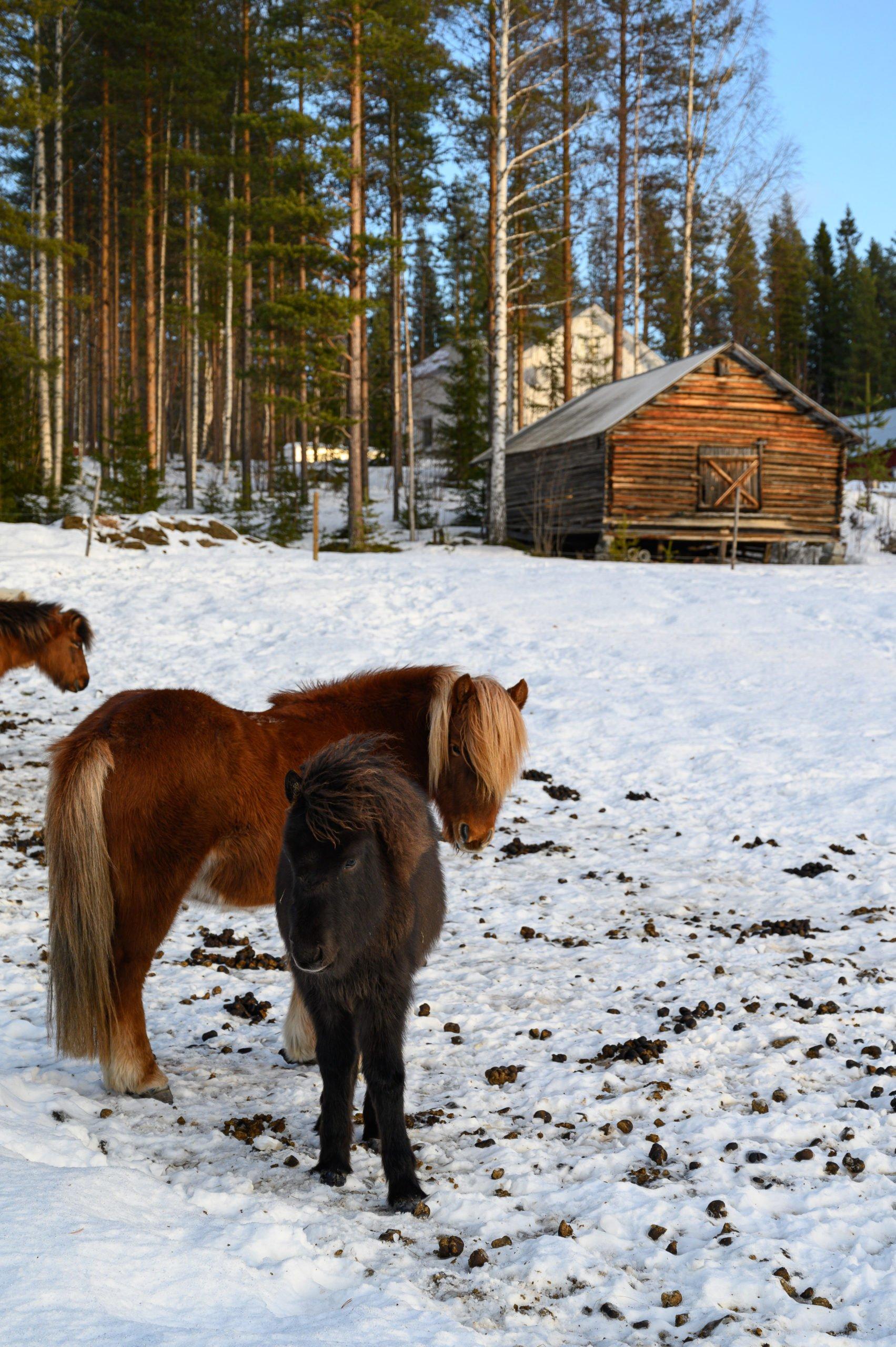 Laponie 1848 scaled