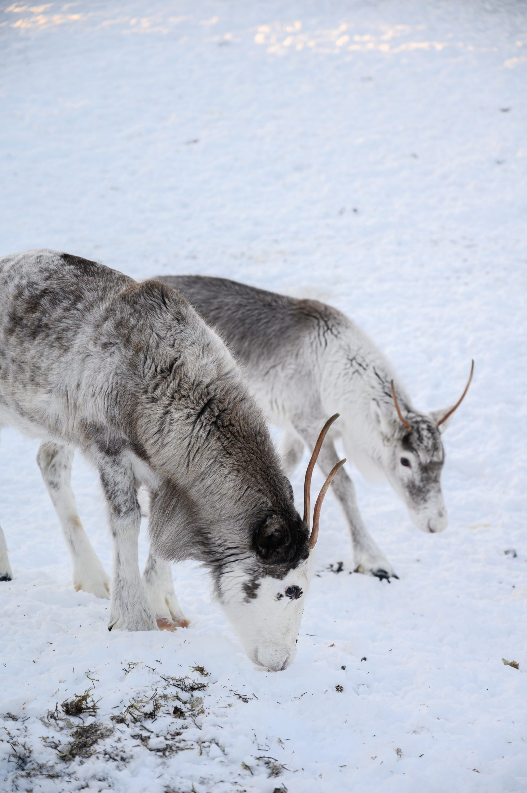 Laponie 2006 scaled