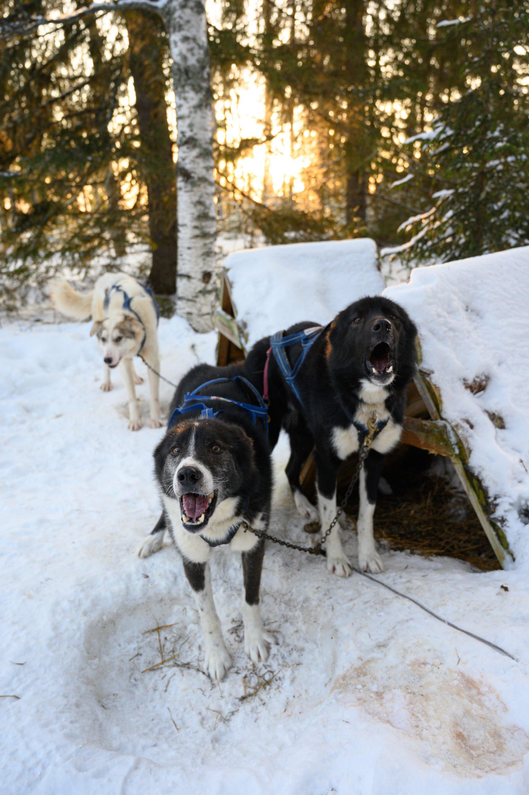 Laponie 2719 scaled
