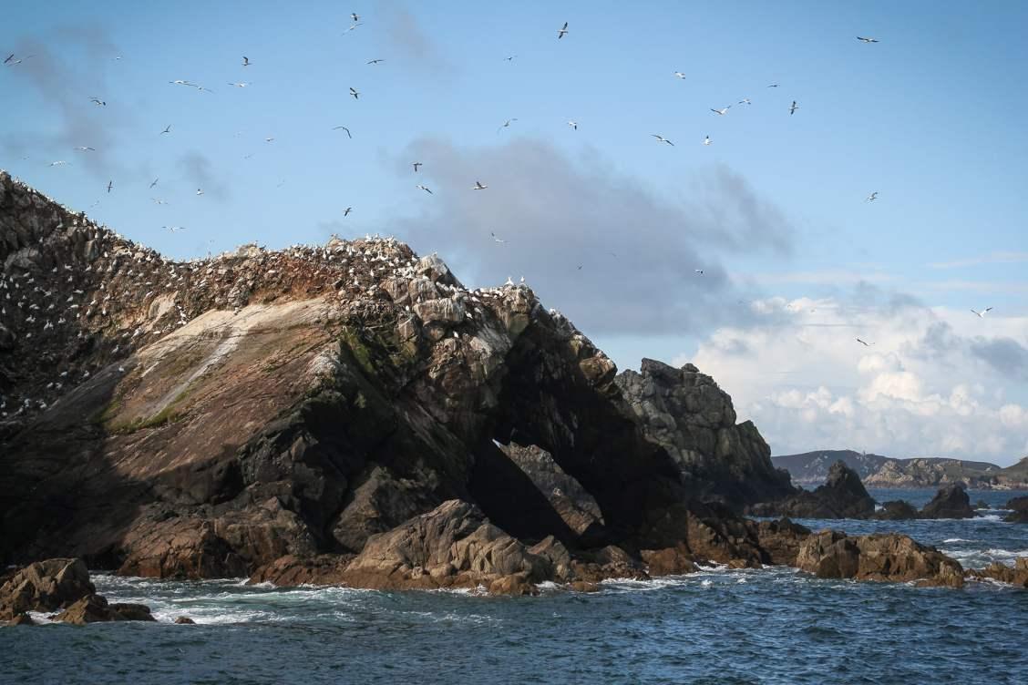 Archipel des 7 îles - bretagne