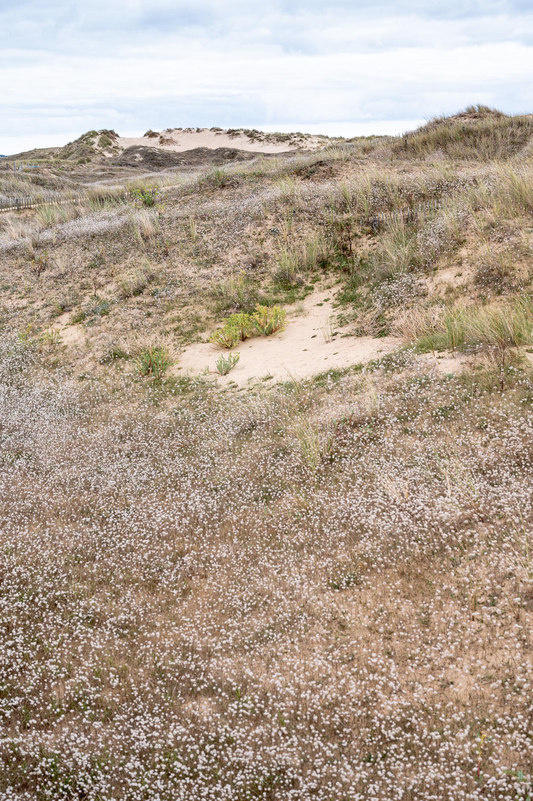 Dune du gâvre Quiberon