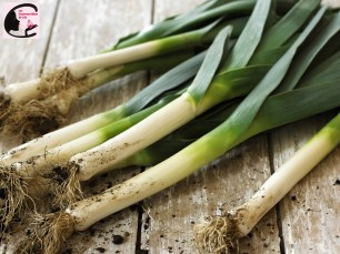 Freshly picked leeks with roots on wooden table
