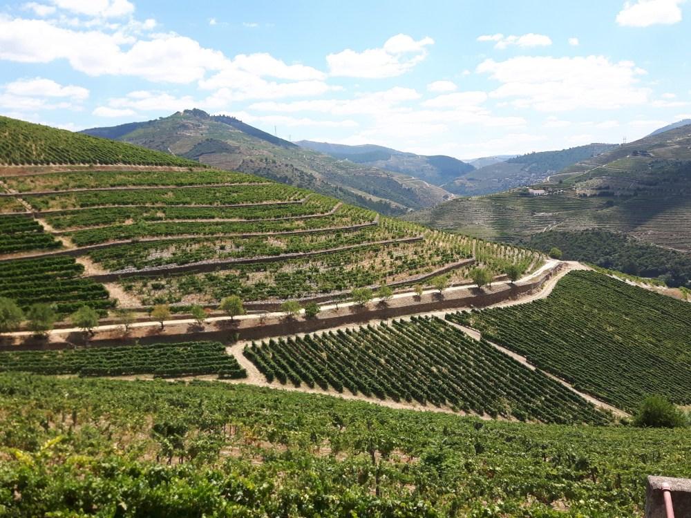 Différentes implantations de la vigne...en terrasse ou en parcelle.
