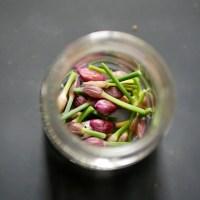 Boutons de fleurs de ciboulette au vinaigre.
