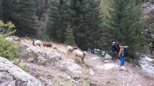161015-16_muzelle_-035