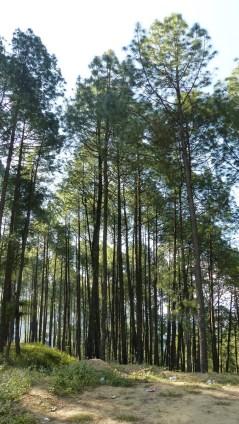 Impressionnants ces grands arbres