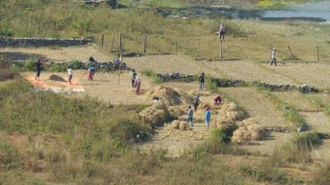 Loin de l'agitation de Pokhara, la vie rurale...