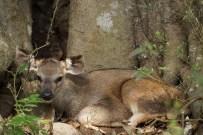 Le petit sambar trouvé au pied d'un arbre