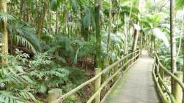 """Le passage dans la """"jungle"""""""