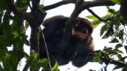 Et quelques singes bien camouflés