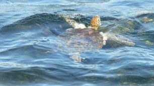 Les tortues ne se laissent pas facilement prendre en photo