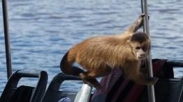 Celui-ci inspecte le bateau