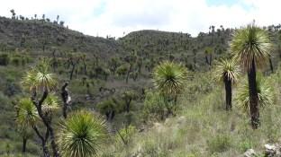 La végétation se plait bien sur le sol volcanique