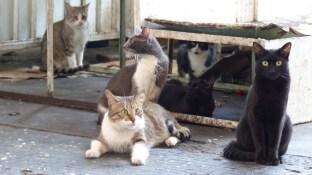 Ces chats attendent patiemment... que le vendeur de poulets d'à côté leur donne à déjeuner!