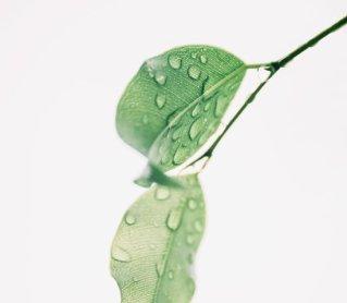 Nettoyer sa peau avec des huiles végétales