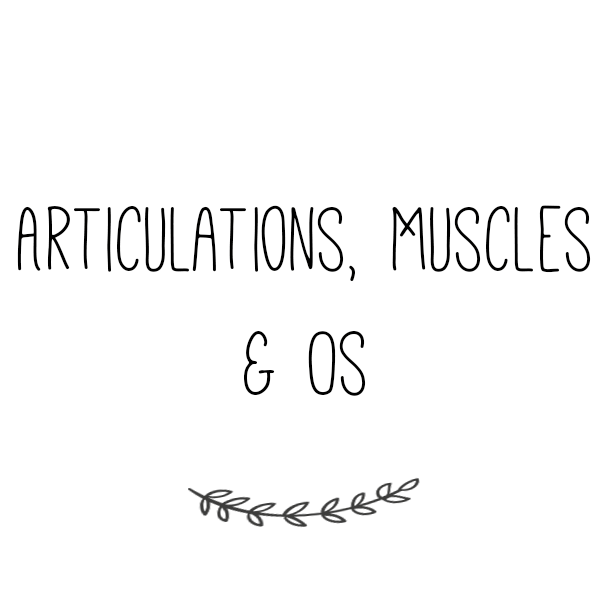 Articulations, Muscles & Os