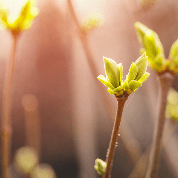 Gemmothérapie & Fleurs de Bach