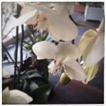Fleur-Regarder-4l