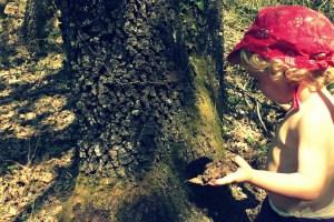 aupr--s-de-mon-arbre