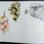 dessin-roscoff-dessiner-bretagne-l26
