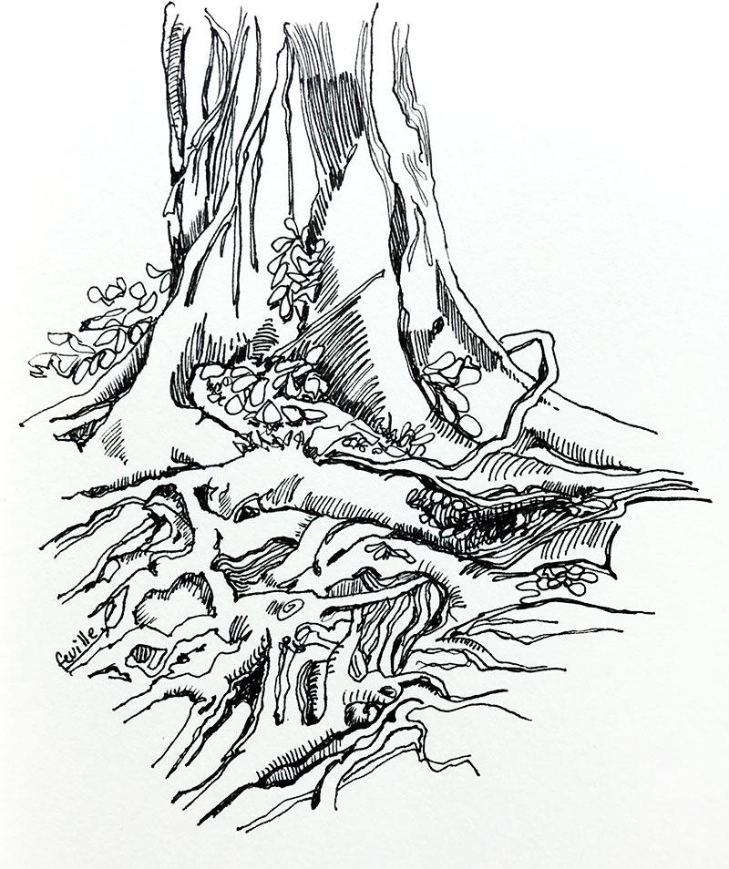 racines-dessin-renata