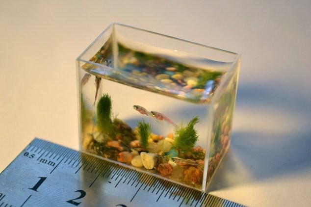 Le plus petit aquarium du monde. - le site du Japon