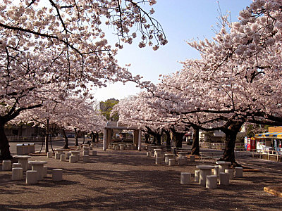 zsakura-at-higashiyama-zoo-3.jpg
