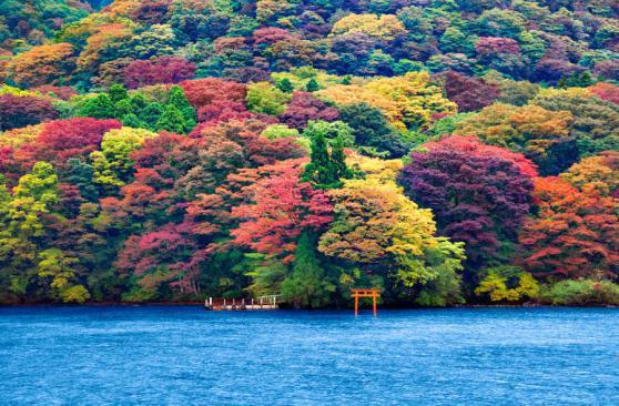 Momiji sur le lac Ashi