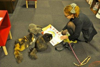 Neko café, éducation des chats