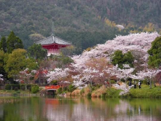 Temple Daikaku, Kyoto