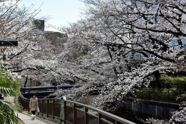 Sen River, Setagaya par Chia Sin Sin