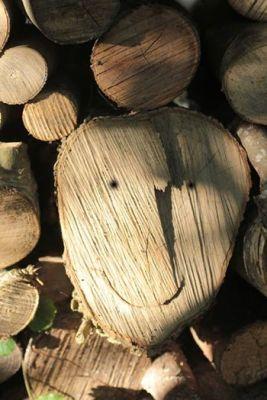 Le génie du bois mort est content... la rosalie montre le bout de ses antennes