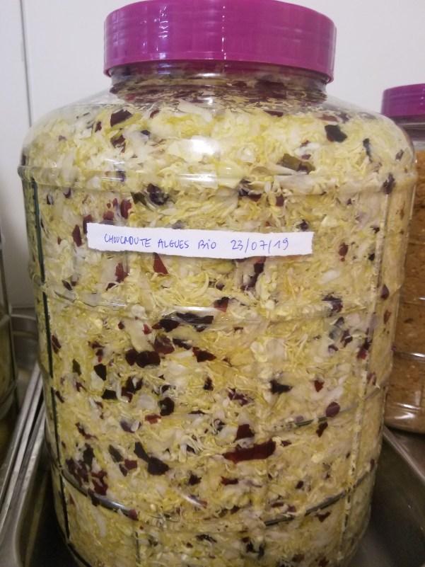 Jarre de fermentation : lacto-fermentation du chou et d'algues