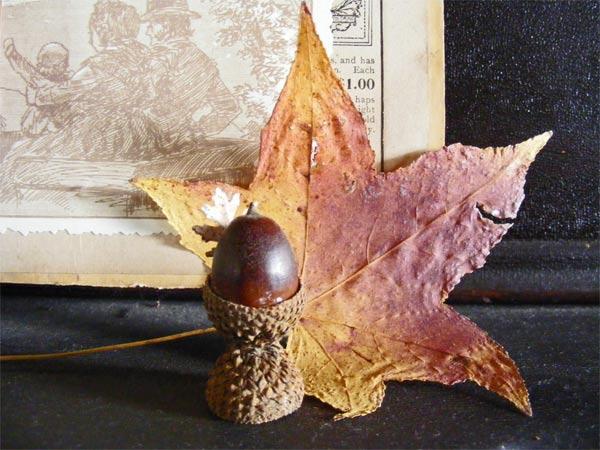acornleaf