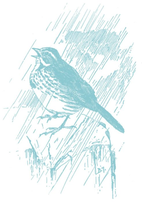 bird-singing-in-rain-copy