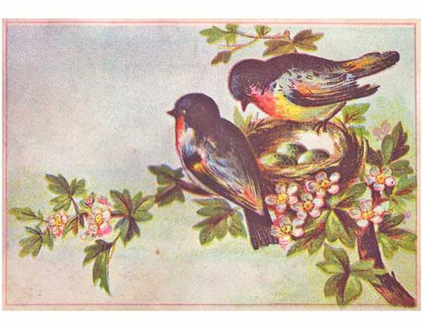 springbirdsagain