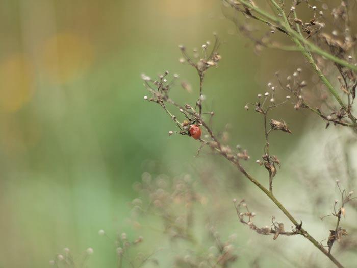 octoberladybug