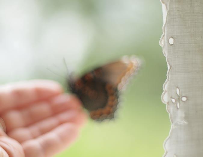 curtainbutterfly
