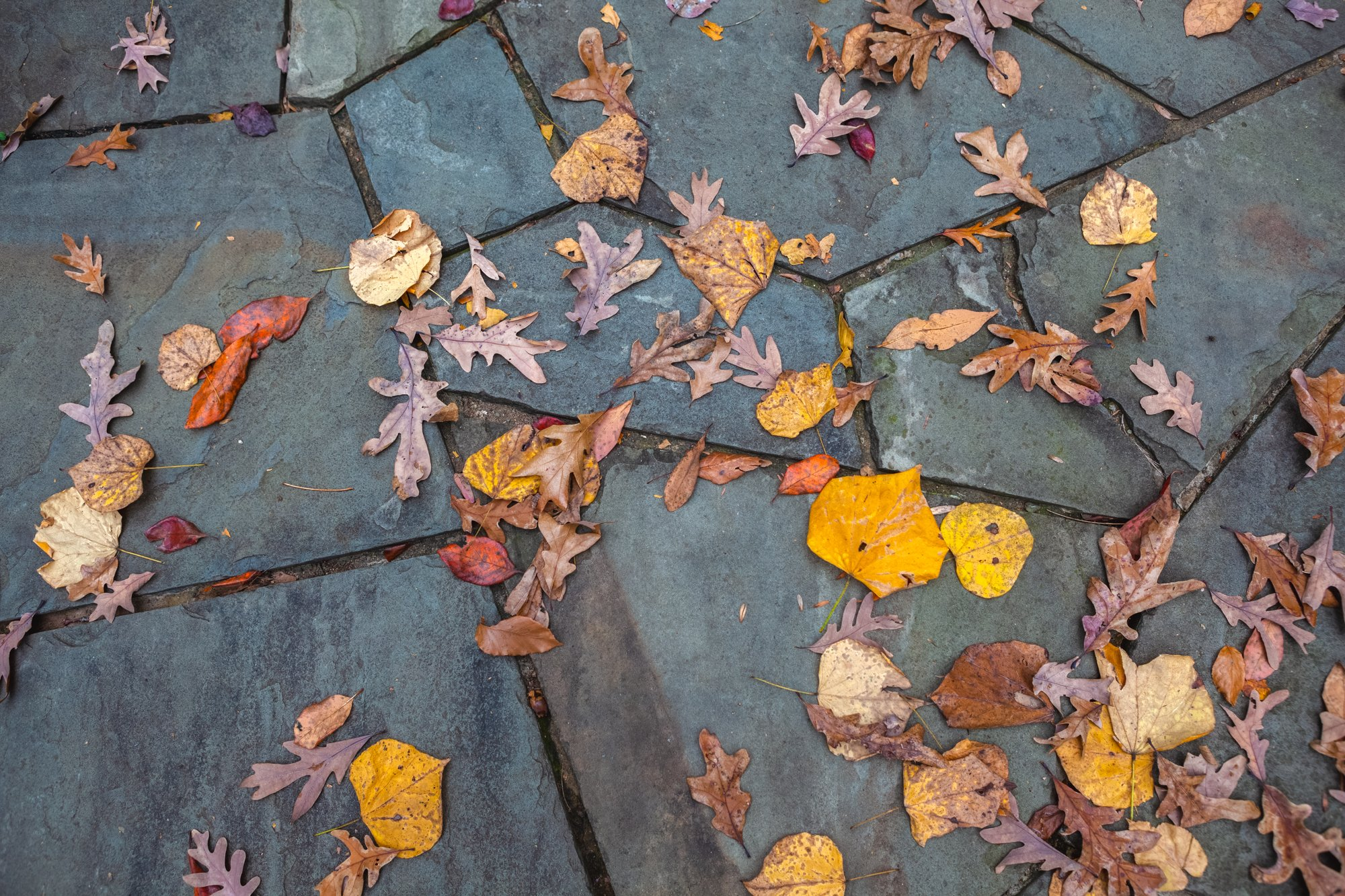 Fallen Leaves on a Path