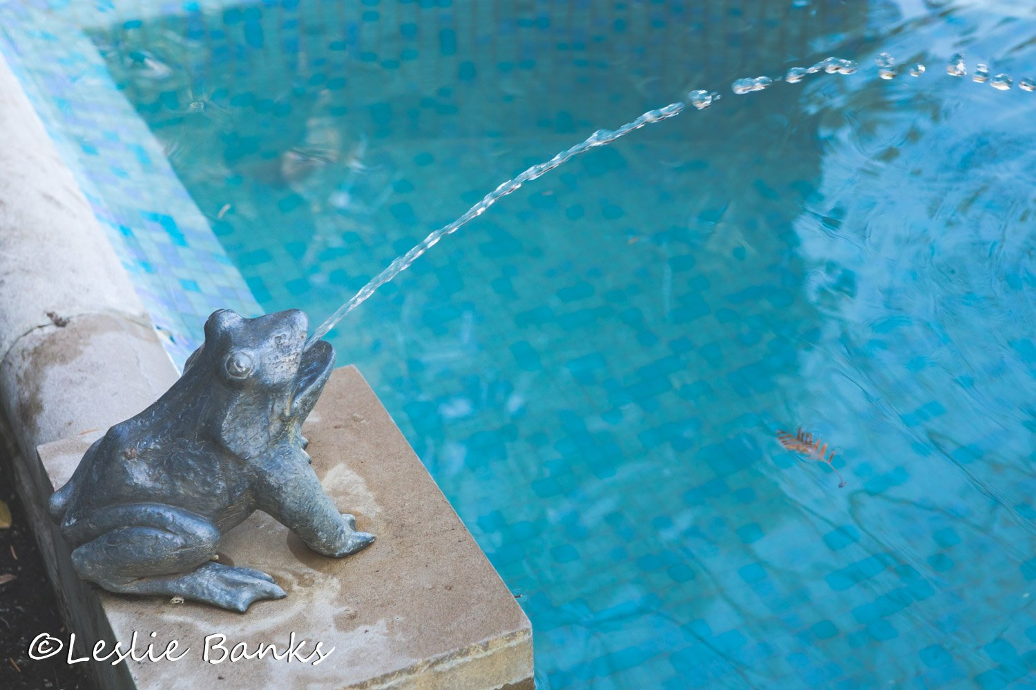 Hillwood Estate Frog Fountain
