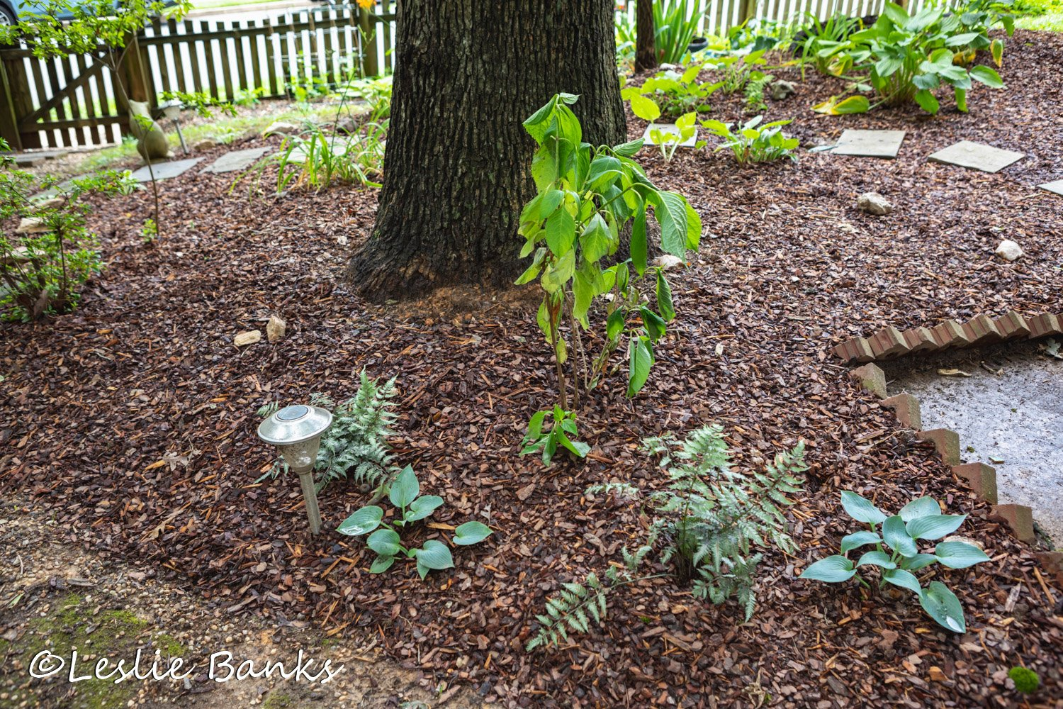 Shade Bed Makeover