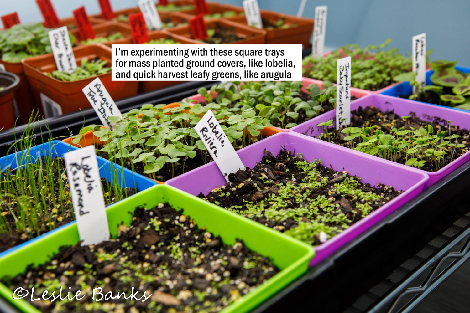 Square Pots with Seedlings