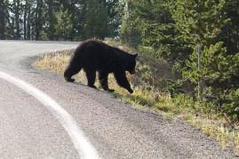 Yellowstone-2262