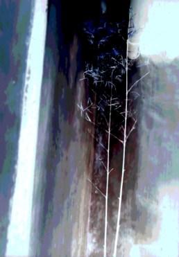 China Delicate Bambo blue white560_bak